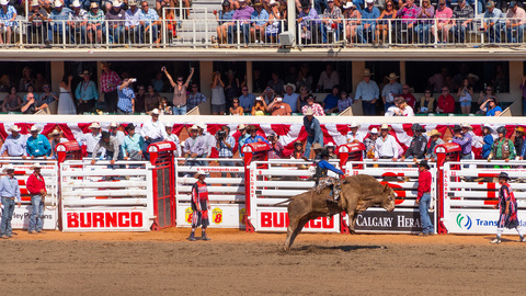Calgary Stampede Rodeo Bull Riding